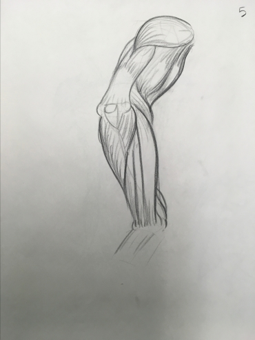 sheridan animation life drawing muscles