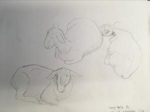 sheridan animation life drawing farm